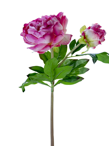 """Picture of 23"""" PEONY W/1F1B"""