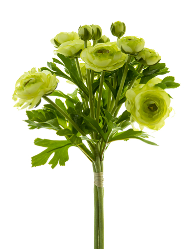 "Picture of 12""  RANUNCULUS BOUQUET"