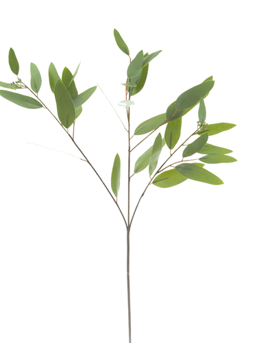 "Picture of 34""LONG LF EUCALYPTUS SPRAY"