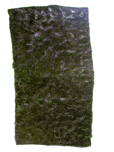 "Picture of 40"" MOSS SHEET"