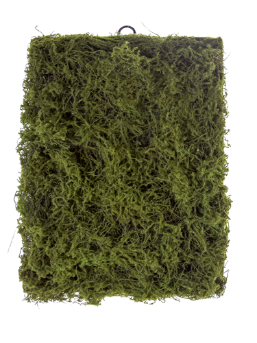 "Picture of 24"" SHAGGY MOSS MAT"