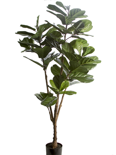 Picture of 6' FIDDLE LEAF TREE