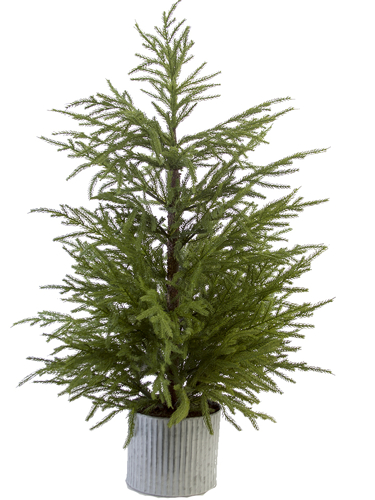 """Picture of 42"""" FIR PINE TREE"""