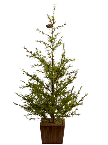 "Picture of 28"" TASMANIAN CEDAR TREE"