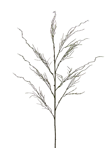 """Picture of 53""""  MOSSY CURLY WILLOW"""