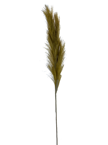 """Picture of 47.5"""" PAMPAS GRASS SPRAY X4"""