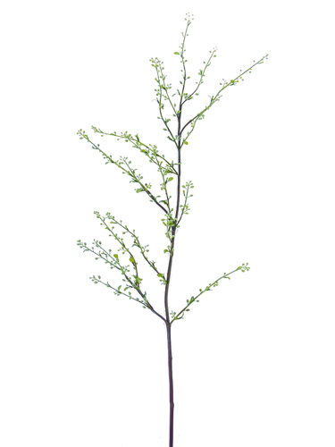 "Picture of 47"" SPIREA BRANCH L W/SEEDS"