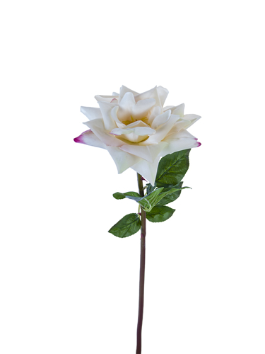 """Picture of 25.5"""" OPEN ROSE STEM"""