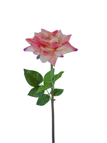 "Picture of 25.5"" OPEN ROSE STEM"