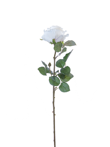 "Picture of 24"" STANDARD ROSE"