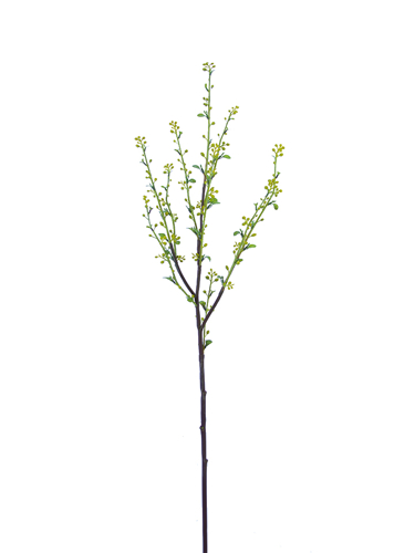 """Picture of 39"""" SPIREA BRANCH"""