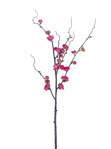 "Picture of 35"" PLUM BLOSSOM BRANCH"
