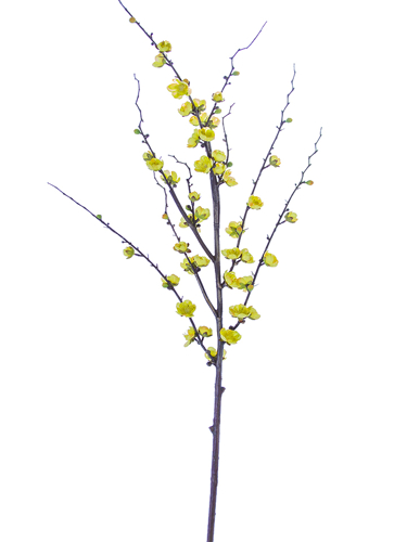 "Picture of 51"" PLUM BLOSSOM BRANCH"
