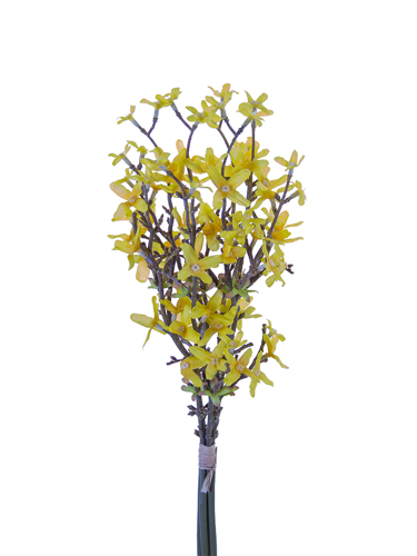 "Picture of 18"" FORSYTHIA BUNDLE"