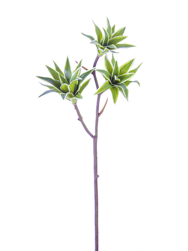 "Picture of 30"" TRADESCANTIA SPRAY"