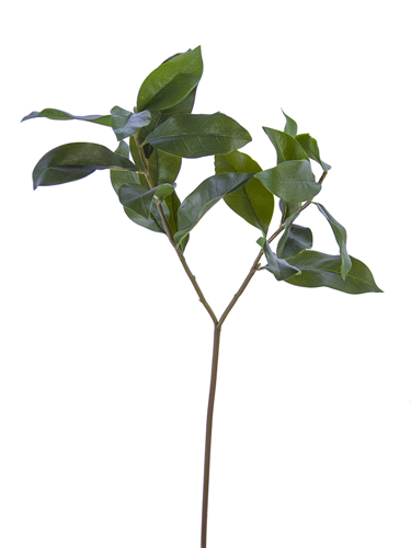 """Picture of 27"""" OSMANTHUS LEAVES SPRAY X2"""