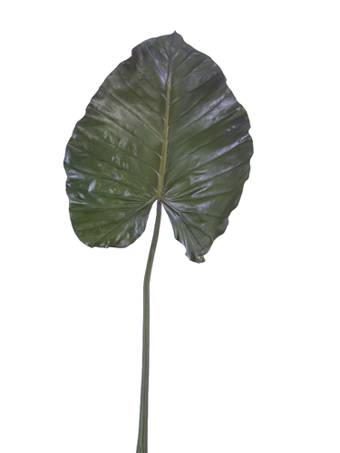 """Picture of 43"""" GUANYIN LEAF"""