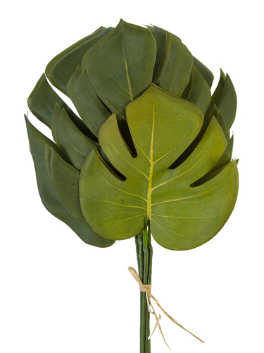 """Picture of 15.5"""" MONSTERA LF BDLE X6"""