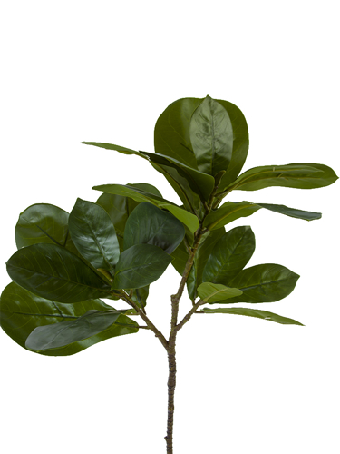 """Picture of 29.5"""" FIG LEAF BRANCH X3"""