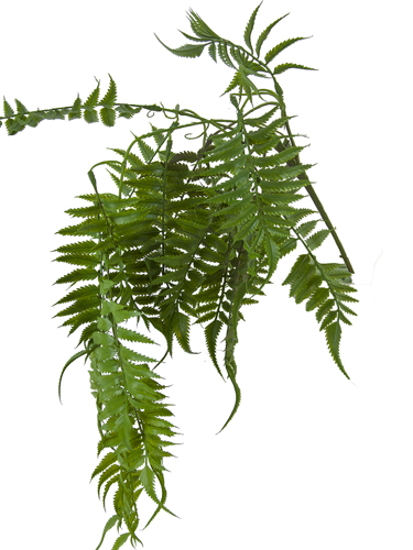 """Picture of 34"""" HANGING BOSTON FERN"""