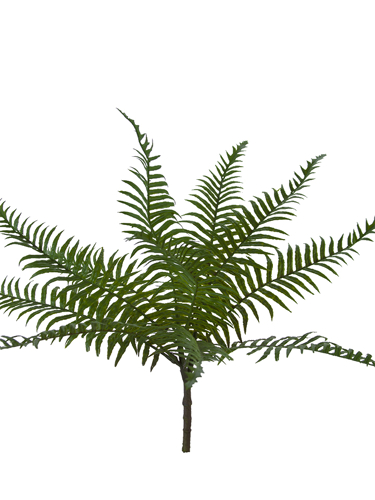 "Picture of 17.5"" TROPICAL FERN BUSH"
