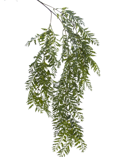 "Picture of 42"" HANGING JAGGED FERN"