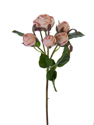 "Picture of 22"" ENGLISH ROSE BUDS X6"