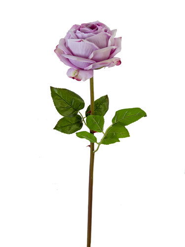 "Picture of 27"" HEDGEROW ROSE STEM"