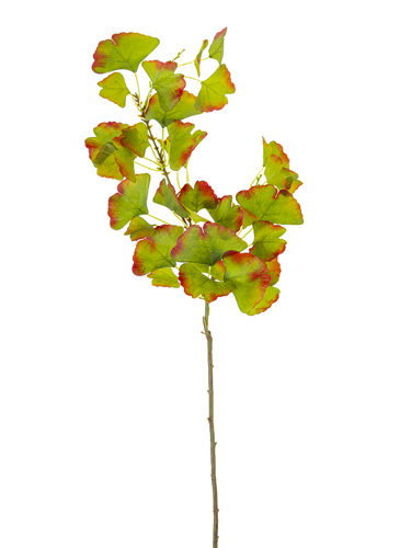 """Picture of 37"""" GINKGO LVS SPRAY"""