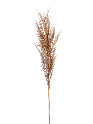 """Picture of 43"""" DRIED WHEAT SPRAY"""