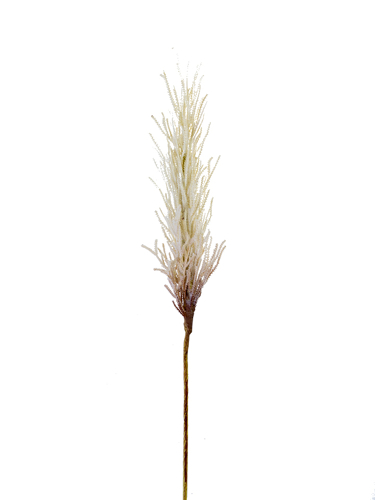 "Picture of 32.5"" DRIED REED SPRAY"