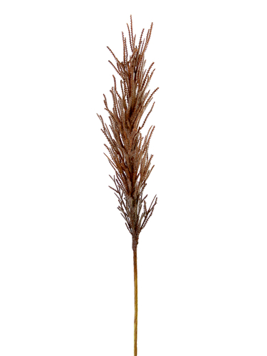 """Picture of 32.5"""" DRIED REED SPRAY"""