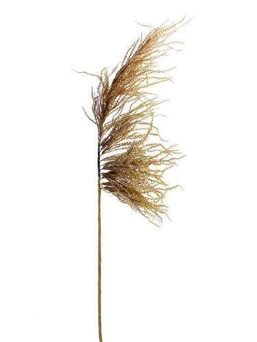 "Picture of 50"" DRIED PLUME GRASS SPRAY"