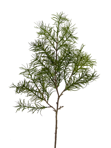 """Picture of 24""""WISPY PINE SPRAY"""