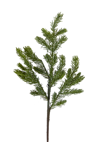 """Picture of 30"""" MOUNTAIN FIR BRANCH"""