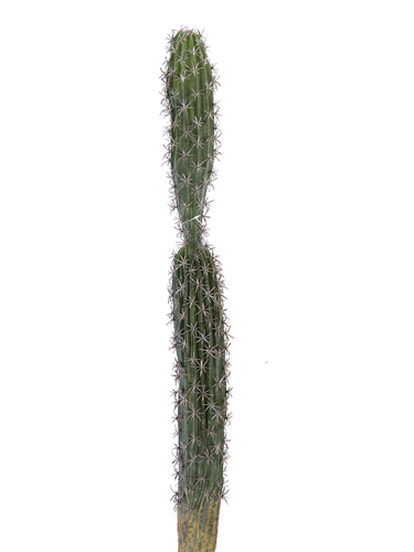 """Picture of 37"""" DOUBLE COLUMN CACTUS"""