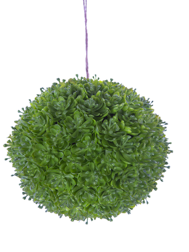 """Picture of 6"""" SUCCULENT BALL"""
