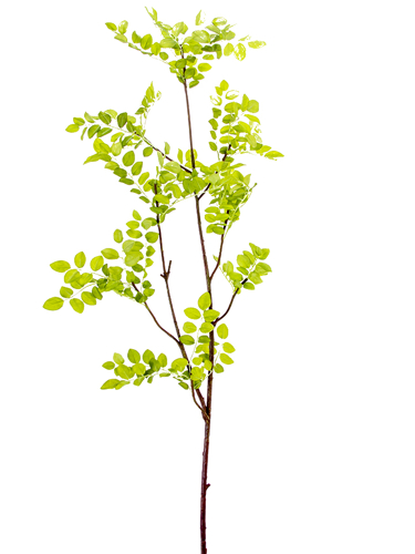 """Picture of 48"""" BOXWOOD LEAVES BRANCH"""