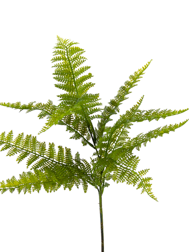 """Picture of 27""""DRYOPTERIS FERN SPRAY"""