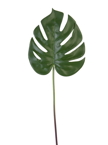 """Picture of 22"""" MONSTERA STEM"""